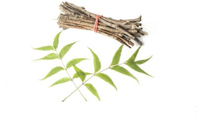 Meaning of Ayurveda